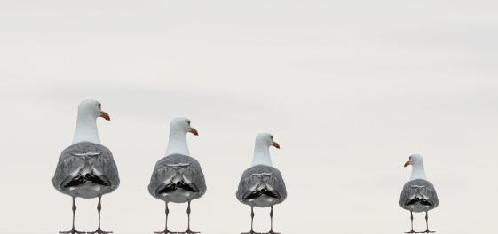 gulls-2662550_1920